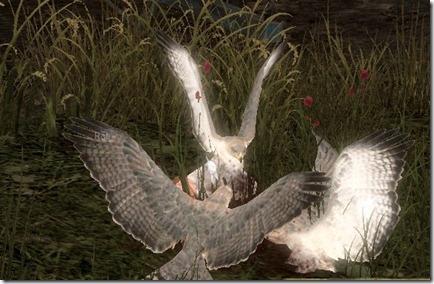 gw2_falcons