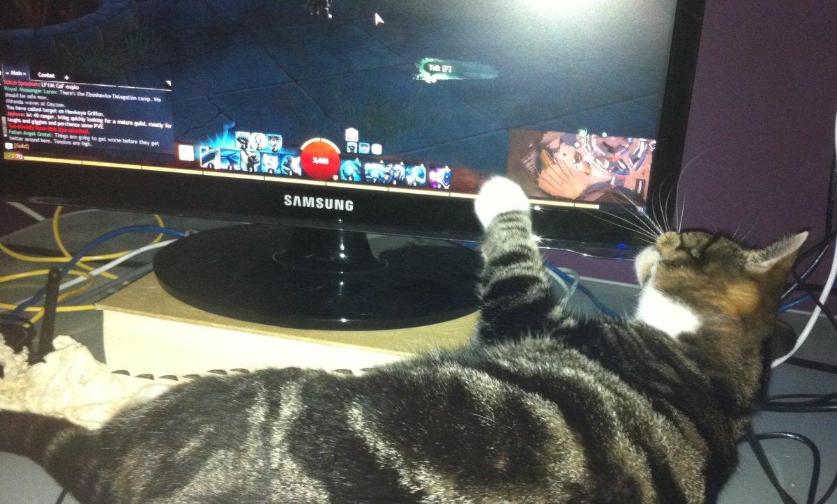 Cat paws at GW2screen