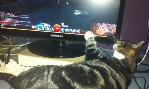 Cat paws at GW2screen