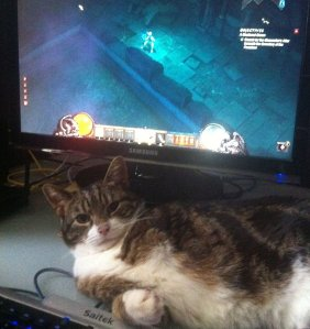cat in front of Diablo 3 screen